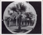 Palm Tree and Adobe Lodge