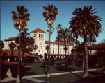 Palm Trees and Nobili Hall