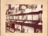 Paleontological museum, Science Building, Santa Clara College, 1900