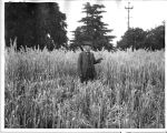Unknown man in a field, circa 1940s