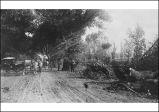 Cutting of Alameda Willows, circa 1878