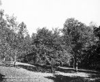 Chestnut orchard, 1911