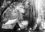 Governor's Camp, State Redwood Park, showing Social Hall, 1913