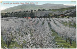 Orchard and foothills, Santa Clara Valley, Cal., circa 1900-1910