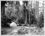 Camp Sempervirens, Big Basin Park, circa 1895-1900