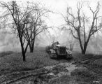 Spraying an orchard, 1952