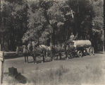 Water wagon on Big Basin Road, circa 1880-1910