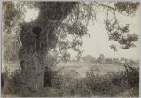 Haystacks along the Alameda, circa 1905