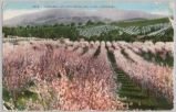 Orchards and Foothills Los Gatos, California, 1911