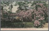 Postcard, Roses join hands in merry dance, Santa Clara, Calif., circa 1900