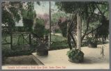 Postcard, Veranda built around Great Rose Bush, Santa Clara, circa 1900