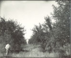 Bellford apple orchard